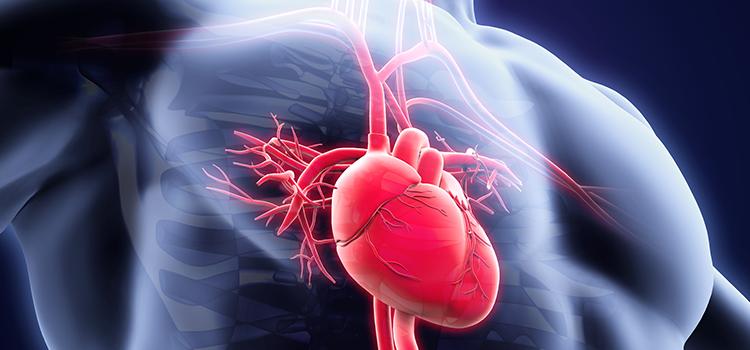 Kalp Cerrahisi