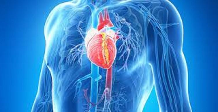 Kalp damar cerrahisi hastalığı aort anevrizması nedir, nasıl teşhis edilir?